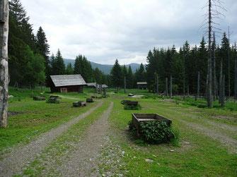 Rotwildwgatter im NP Bayerischer Wald, hier im Sommer