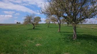 Streuobstwiesen sind ökologisch gesehen sehr wertvolle Lebensräume, die es zu erhalten gilt.