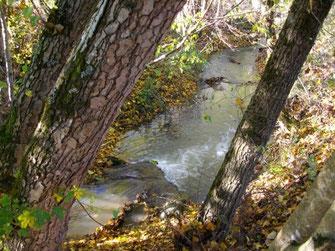 Ruisseau de Prat Vayssière