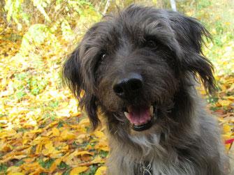 Ich hab viele Bilder von Blacky, und auf jedem sehe ich wie er sich gefühlt hat in diesem Moment. Hunde leben immer im jetzigen Augenblick. Blackys Botschaften haben mein Leben sehr nachhaltig verändert. Danke Blacky.