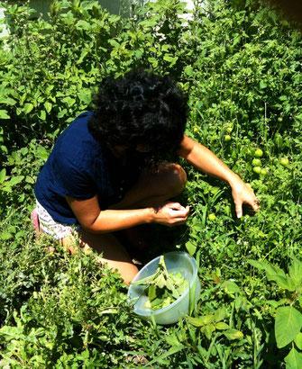 Mitra in ihrem Garten beim Kräuter sammeln
