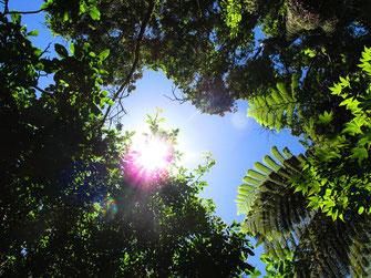 木漏れ日と蝉時雨(さざんか亭の庭で)