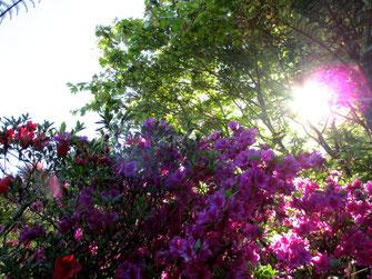 evening light garden