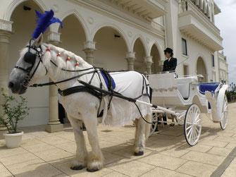 チャペルでの挙式後、お二人は馬車に乗って 披露宴会場まで 移動。夏なので、御者は、シャツとベスト