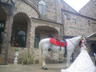 馬に乗って、結婚式をしたい。1年も前からのご依頼。ここからが始まりでした。