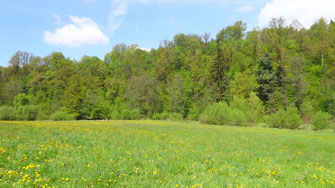 Zwettltal mit prioritär zu schützendem Schlucht- und Hangmischwald