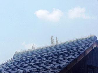 ニラハウスの屋根の上