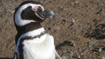 Bild: Eiteler Pinguin