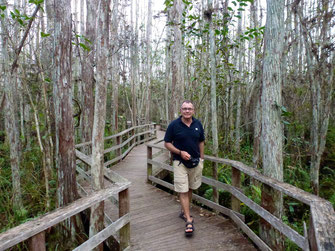 Bild: Boardwalk im Corkscrew Swamp Sancturary