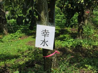 和梨の品種名札
