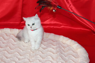 Sissy, 11 Wochen alt (Foto: 30.5.2015)