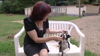 Justice : un homme condamné à six mois de prison ferme à Agen pour maltraitance animale