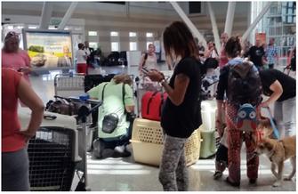 Großer Bahnhof am Flughafen – Tiere aus Notstationen fliegen mit Flugpaten ins neue Zuhause.
