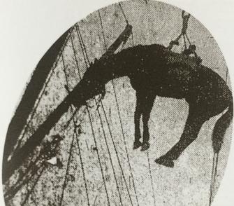 小樽港にてあいだ丸に載せられる軍馬