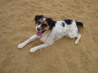 Hunde in Spanien, Mischlinge, Strassenhunde