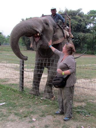 Banane für den Elefant