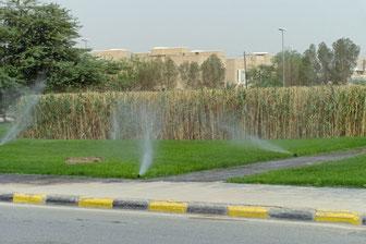 ... zur Gewinnung von Beregnungswasser