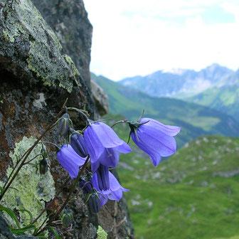 Bild Blumen am Berg