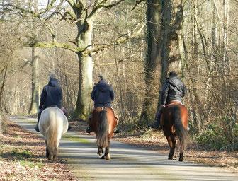 grand gite - les balades à cheval dans la forêt