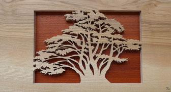 Le cèdre - Atelier Eclats de bois