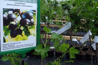 Beeren neu gezüchtet