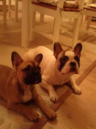 Butges und sein Bruder Chilli Pepper (Carlchen)