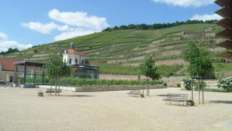 Weinberge bei Schloss Wackerbarth