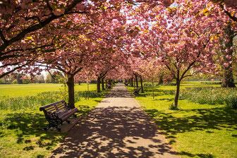 Liegenschaft Bäume Rasen Weg