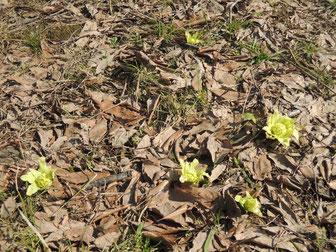 大量のばっけ!春ですね~