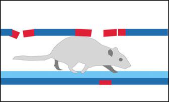 Rattenbekämpfung im Kanal, Georg Mayer GmbH, Nußdorf