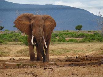 4 Tage Safari in Kenia