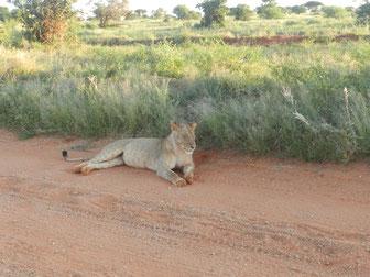 Safaris in Kenia buchen Angebote für Urlaub Kenia