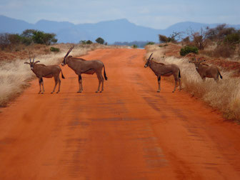 Tsavo Ost National Park Kenia