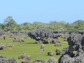 Korallengarten Wasini Island Kenia