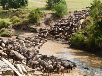 Migration Massai Mara, Safariangebote Kenia