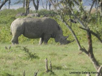 Nashorn auf einer Safari in Kenia im Lake Nakuru