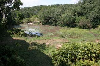 Shimba Hill 1 Tag Safari