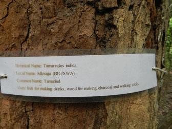 Kaya Kinondo Forest Ausflug