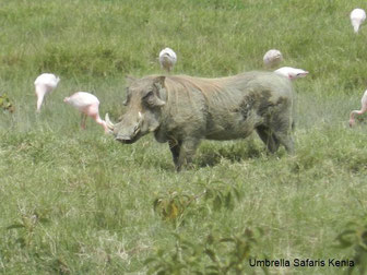 Kenia Safaris in den Nakuru Nationalpark