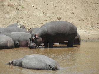 Flugsafari Masai Mara Angebote