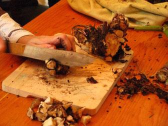 Préparation des racines de pissenlit pour le séchage, crédit photo : Anne Vastel