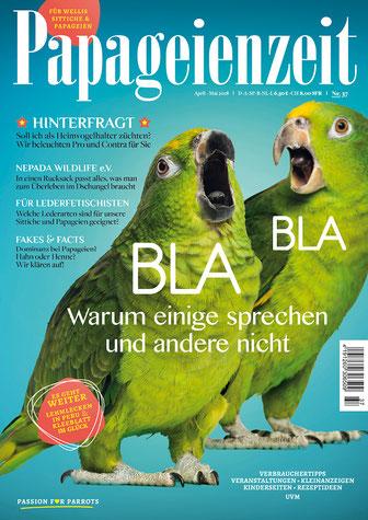 Papageienzeit 37 zeigt zwei Amazonen und hinterfragt die Hobbyzucht, berichtet über Nepada-Wildlife, welches Leder sich zum Spielen eignet und erklärt warum Papageien sprechen