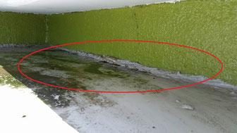 (写真1)水かけ点検中。大雨が降ると玄関屋根に水が溜まる再現をしました。