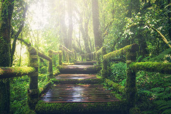 Reise in den Dschungel