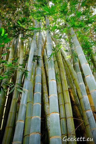 Parc de Coconi
