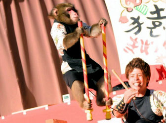 日比谷大江戸まつり 2019, ステージプログラム, 参加出演者, 猿まわし, 日光猿軍団