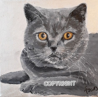 Katzenporträt einer grauen Katze mit bernsteinfarbenen Augen