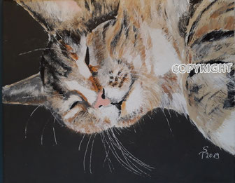 Katzenporträt: getigerter Katzenkopf. Katze hat die Augen geschlossen