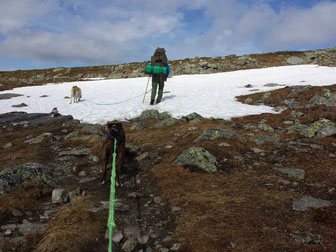 Snow fields on the way to the peak - July 2015