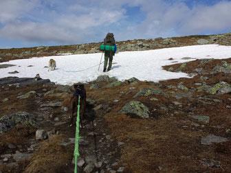 Schneefelder im Juli auf dem Weg zum Gipfel